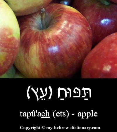 Apple in Hebrew