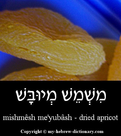 Apricot in Hebrew