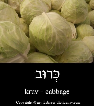 Cabbage in Hebrew