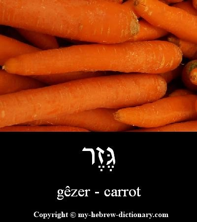 Carrot in Hebrew