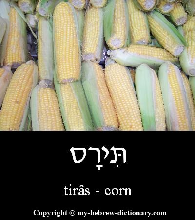 Corn in Hebrew