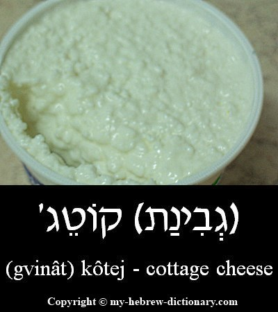 Cottage cheese in Hebrew