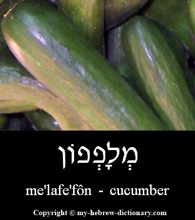 Cucumber in Hebrew