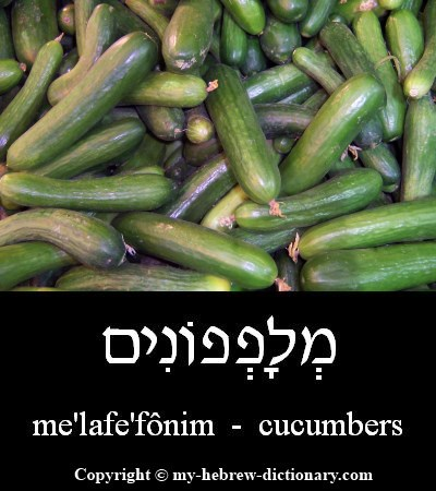 Cucumbers in Hebrew