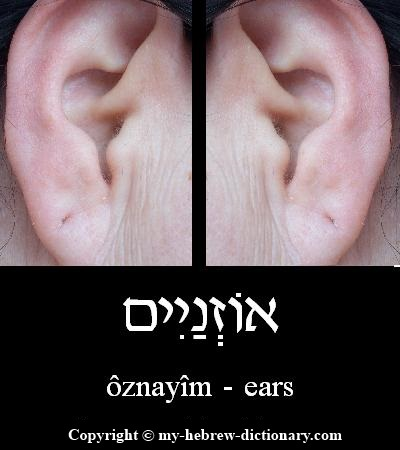 Ears in Hebrew