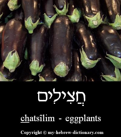 Eggplants in Hebrew