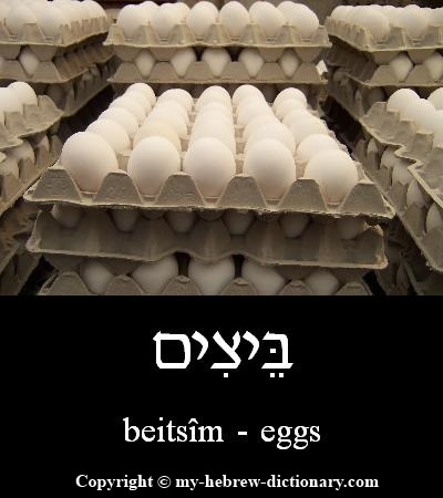 Eggs in Hebrew