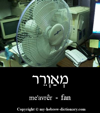 Fan in Hebrew
