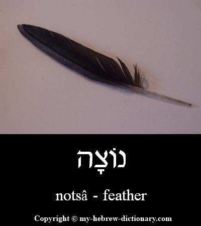 Feather in Hebrew