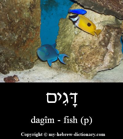 fish in hebrew
