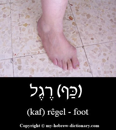 Foot in Hebrew