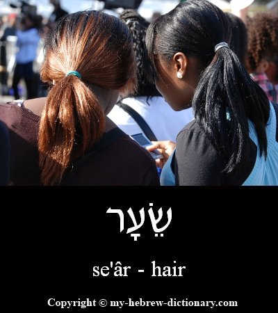 Hair in Hebrew