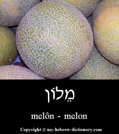 Melon in Hebrew