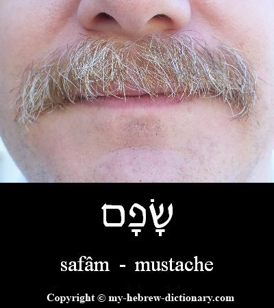 mustache in Hebrew
