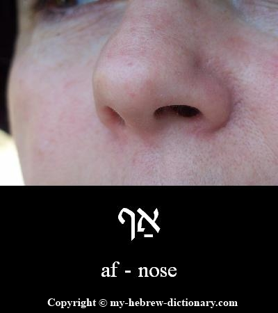 Nose in Hebrew