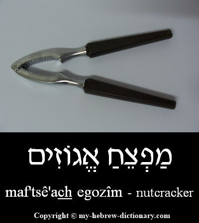 Nutcracker in Hebrew