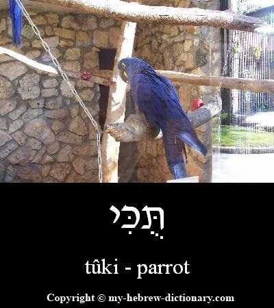 Parrot in Hebrew
