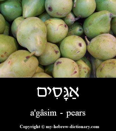 Pears in Hebrew