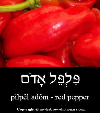 Pepper in Hebrew