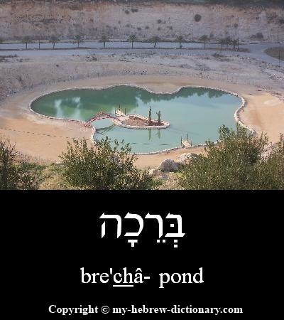 Pond in Hebrew