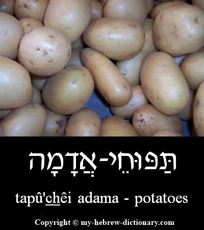 Potatoes in Hebrew