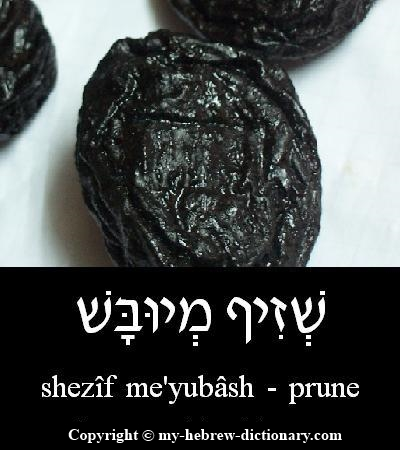 Prune in Hebrew