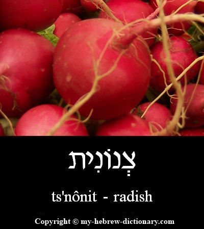 Radish in Hebrew
