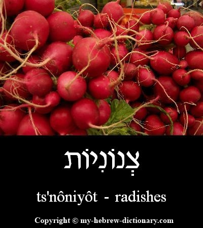 Radishes in Hebrew