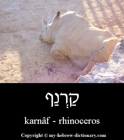 Rhinoceros in Hebrew