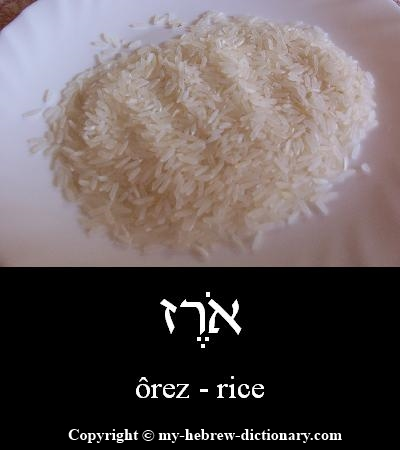 Rice in Hebrew