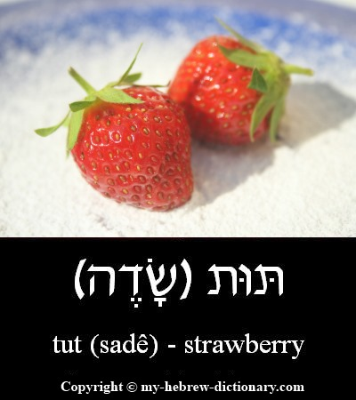 Strawberry in Hebrew