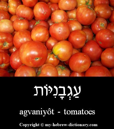 Tomatoes in Hebrew