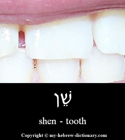 Tooth in Hebrew