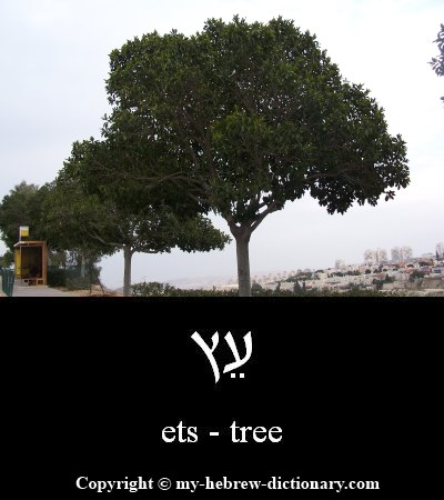 Tree in Hebrew